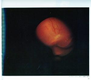 ライフ写真―生きている胎児―