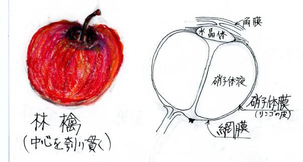 リンゴと目玉